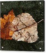 Fallen Leaves On Frozen Water Acrylic Print