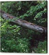 Fallen Log Acrylic Print