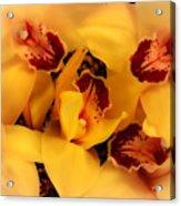 Fallen Orchids Acrylic Print