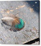 Fallen Peacock Feather Acrylic Print