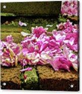 Fallen Petals Acrylic Print
