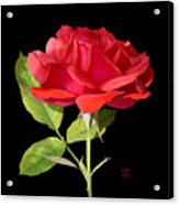 Fallen Red Rose Cutout Acrylic Print