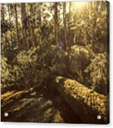 Fallen Tree In Foliage Acrylic Print