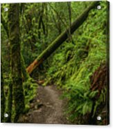 Fallen Tree On The Trail Acrylic Print