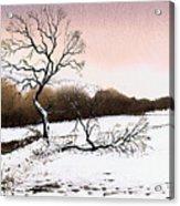 Fallen Tree Stainland Acrylic Print