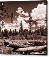 Fallen Trees Acrylic Print