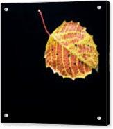Falling Birch Leaf Acrylic Print