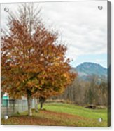 Falling Leaves In Silo Park Acrylic Print