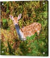 Fallow Deer 2 Acrylic Print