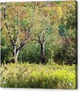 Fallow Meadow Acrylic Print