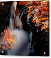 Falls Foliage Acrylic Print