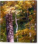 Falls Splendor Acrylic Print