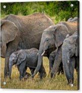 Family Of Elephants Acrylic Print