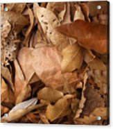 Family Of Leaves Acrylic Print