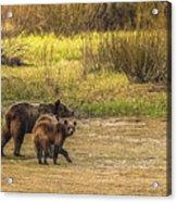 Family Walk At Dawn Acrylic Print