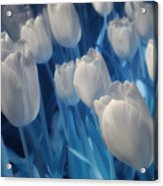Fanciful Tulips In Blue Acrylic Print