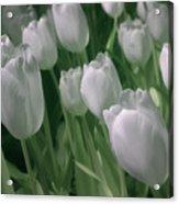 Fanciful Tulips In Green Acrylic Print