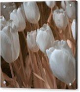 Fanciful Tulips In Peach Acrylic Print