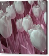 Fanciful Tulips In Pink Acrylic Print