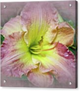 Fancy Daylily In Pink And Yellow Acrylic Print