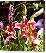 Fancy Lilies In Garden Acrylic Print