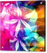Fancy Pansy Candy Acrylic Print