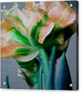 Fancy Tulip Acrylic Print