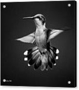 Fantail Hummingbird Square Bw Acrylic Print