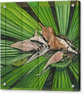 Fantail Palm Plateau Acrylic Print