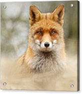 Fantastic Mr Fox Acrylic Print