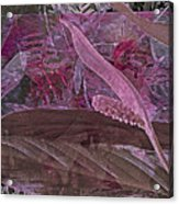 Fantasy African Violets And Peace Lily Pink, Red And Pink Acrylic Print