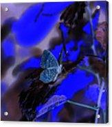 Fantasy Blue Butterfly Acrylic Print