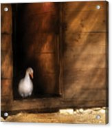 Farm - Duck - Welcome To My Home  Acrylic Print