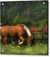 Farm - Horse - In The Meadow Acrylic Print