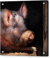 Farm - Pig - Piggy Number Two Acrylic Print