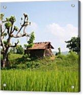 Farm And A Hut Acrylic Print