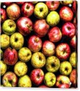 Farm Apples Acrylic Print