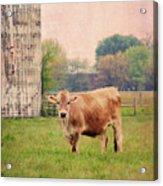 Farm Dreamscape Acrylic Print