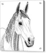 Farm Horse In Pointillism Acrylic Print