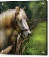 Farm - Horse - White Stallion Acrylic Print