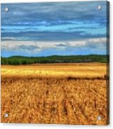 Golden Field Farm Li.ny Acrylic Print