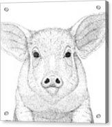 Farm Pig In Pointillism Acrylic Print