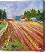 Farm Rows Acrylic Print