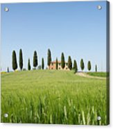 Farmhouse With Cypress Trees And Crops In Tuscany Acrylic Print