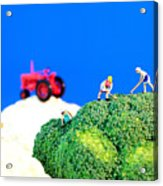 Farming On Broccoli And Cauliflower II Acrylic Print