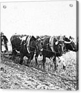 Farming: Ploughing, C1930 Acrylic Print