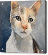 Farmyard Cat Acrylic Print