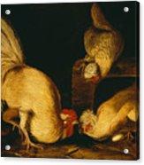 Farmyard Fowls Acrylic Print