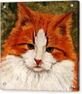 Fat Cat Acrylic Print