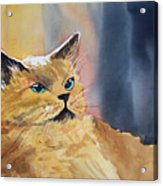 Fat Cat Acrylic Print